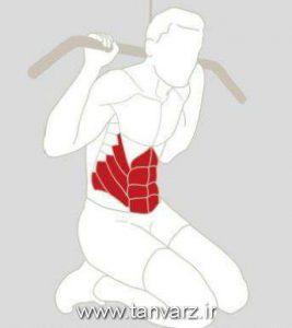 عضلات شکمی